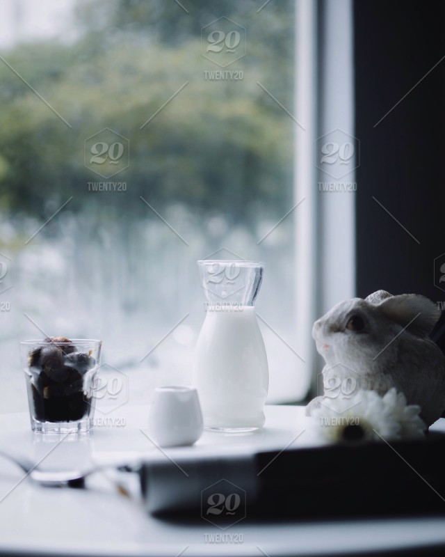 Rabbits and Coffee Cubes  stock photo aaf233fd-49d8-4021-b577