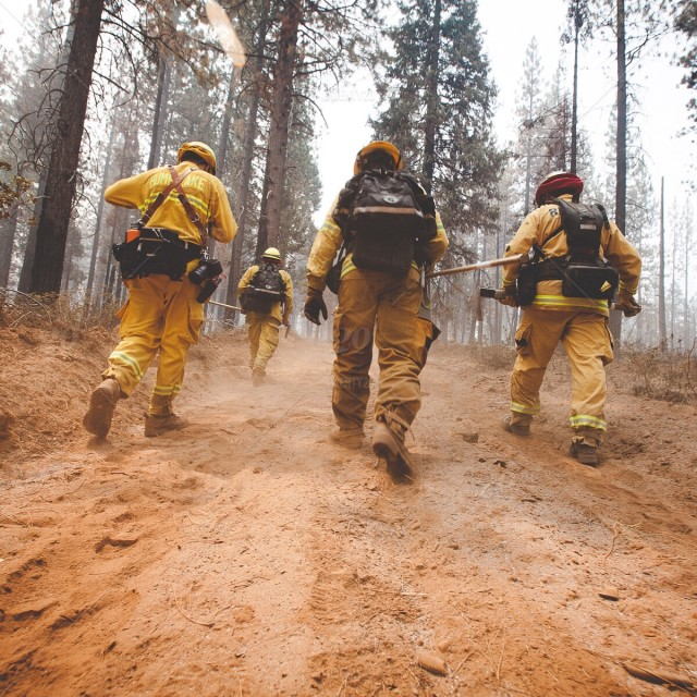 stock photo, forest, working, fire, firefighter, work, wildfire, hardwork, wildland-firefighter, forestfire, wildland-fire