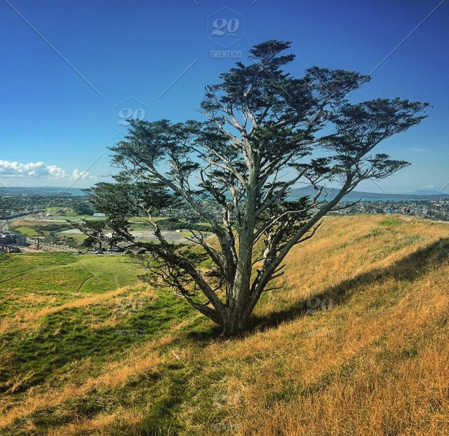 One Tree At Mt Wellington Auckland New Zealand Stock Photo