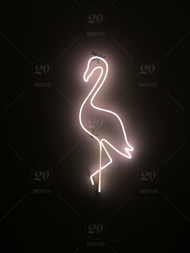 Flamingo Neon Sign At A Friend S House Stock Photo 463f4ba2 8786