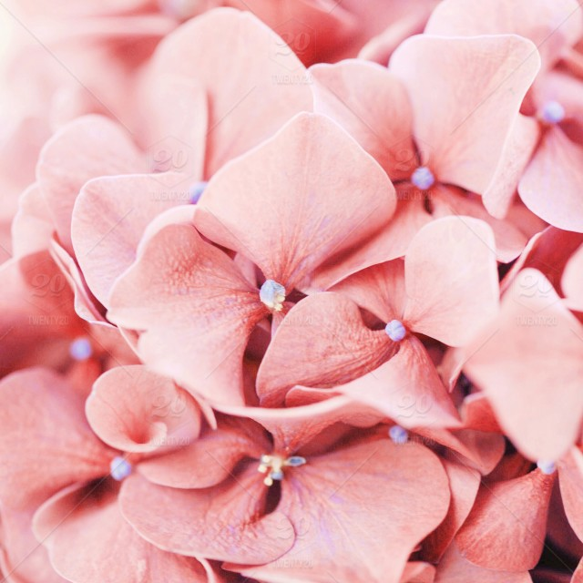 Pink pastel pastels pink flower pink flowers pastel colors stock photo pink pastel pastels pink flower pink flowers mightylinksfo
