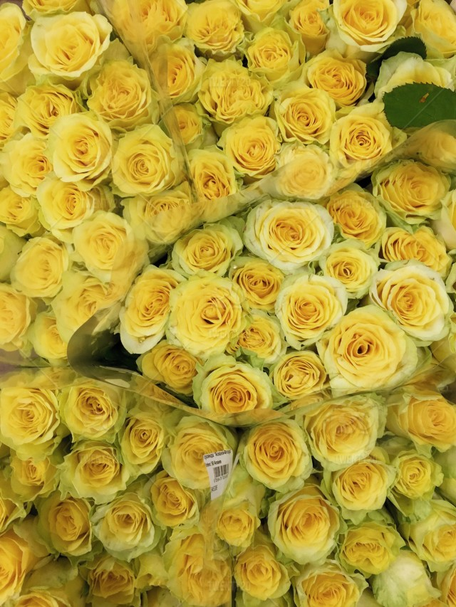 Yellow Roses Background Yellow Flower Yellow Leaves Yellow