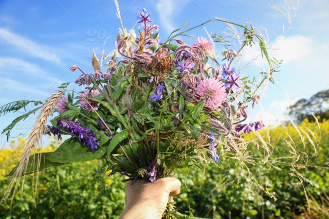Beautiful Bouquet With Wild Flowers Stock Photo
