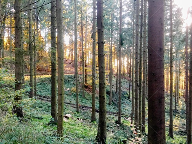 Forest Glade In Austria Stock Photo 34d24ab4 116c 4c94 8d6d