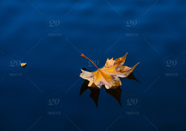 Fall dead leaves floating in the pond stock photo 86b2ba38