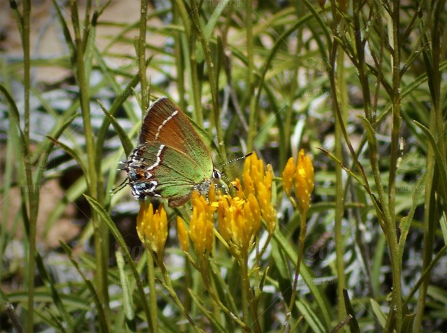 Spring Flowers And Butterfly A Beautiful Butterfly Sits Atop A