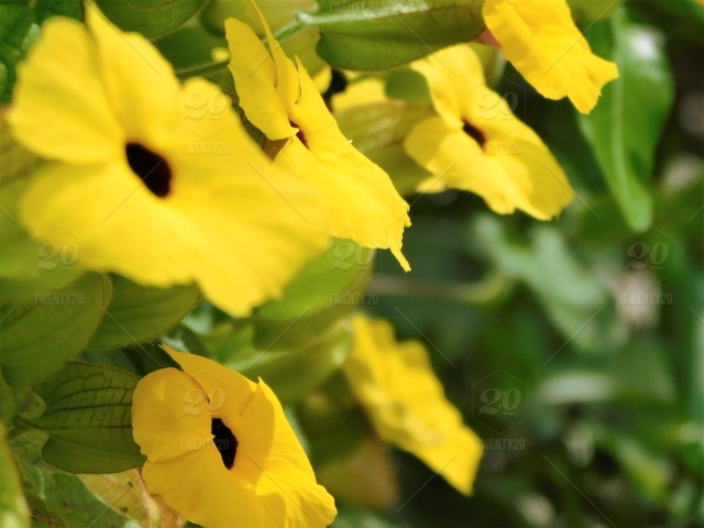 Spring Flowers In The Butterfly Habitat Bright Yellow Flowers