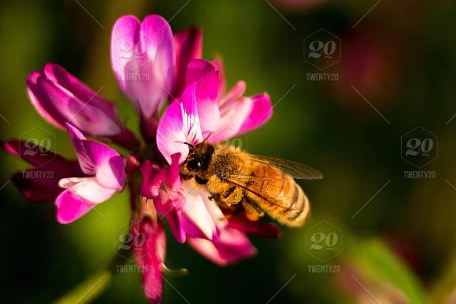 Spring flower and bee stock photo 256cb75f a800 4006 9489 c690c9b324bc spring flower and bee mightylinksfo