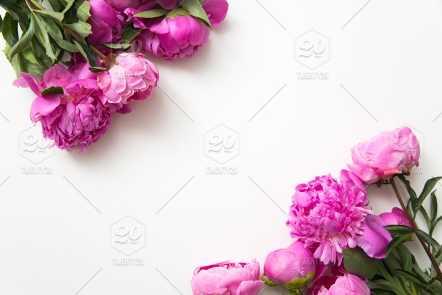 White background flowers springtime pink flowers peonies stock photo white background flowers springtime pink flowers peonies mightylinksfo Images