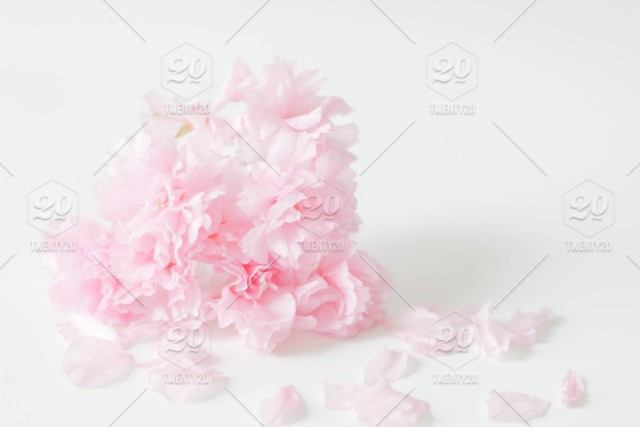 A simple and soft pink flower bouquet collected the past spring a simple and soft pink flower bouquet collected the past spring against a white desk and white background mightylinksfo