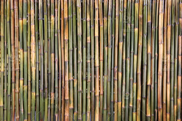 Fragment of bamboo wall for background  Chiangmai, Thailand  stock