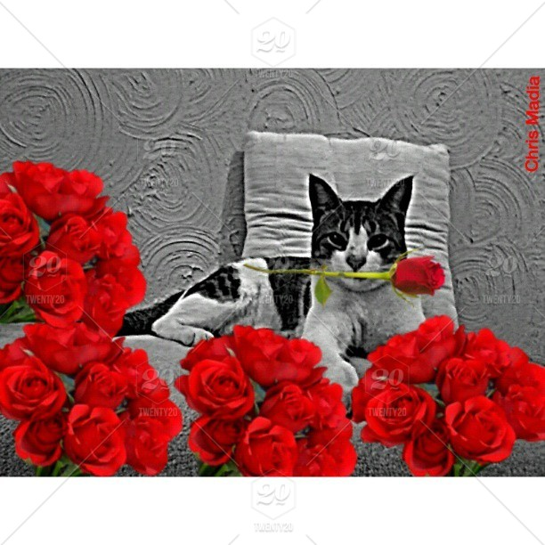 Flowers For You Chris Madia Gallery Good Morning Stock Photo