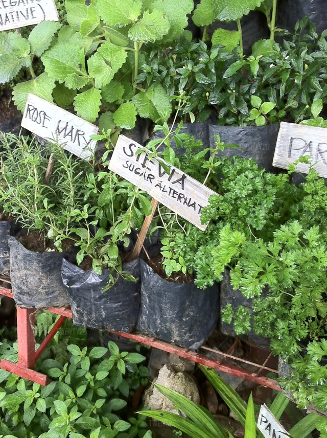 stock photo, nature, nobody, outdoors, farm, plant, growth, western-script, vertical, soil, parsley, plants, text, greenhouse, plant-nursery, variation, spice, flora, day, tags, market, label, rosemary, herbs, colour-image, potted, stevia, cultivar