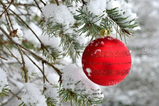 Nominated Red Glitter Christmas Ornament Hanging In A Tree