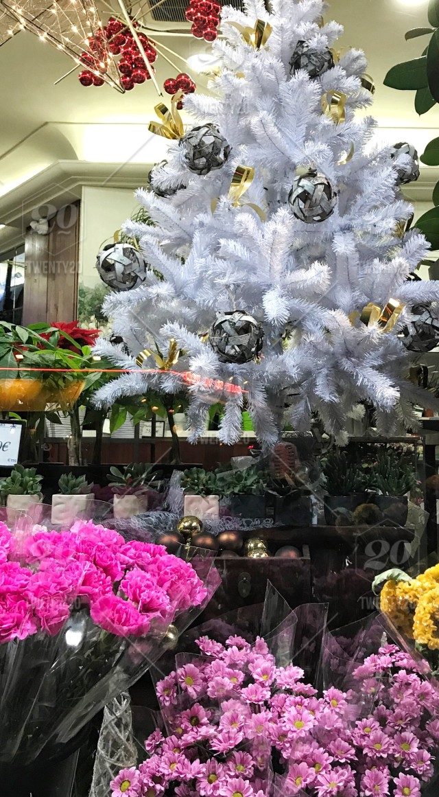 Window Display Of White Christmas Tree And Outside Of The Florists