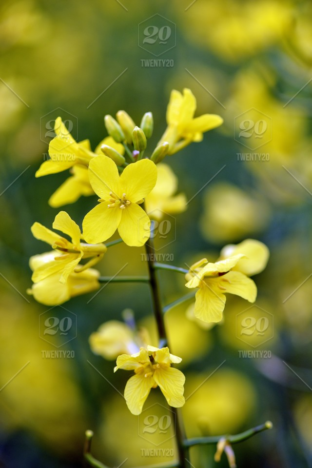 Elective Focus Close Up Photography With Beautiful Yellow Flowers