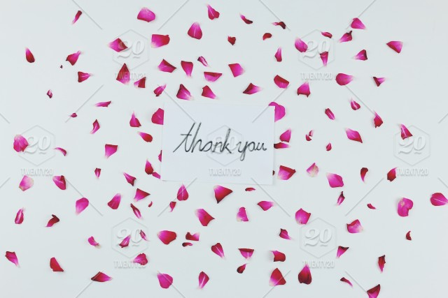 Thank You For All Support ^^ Red Rose Petals With Thank You Word On White  Background