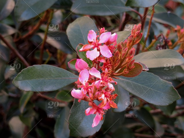Early spring flowers 032018 stock photo 916866a7 396a 40b9 b46b stock photo flower pink green spring california beautiful early mightylinksfo