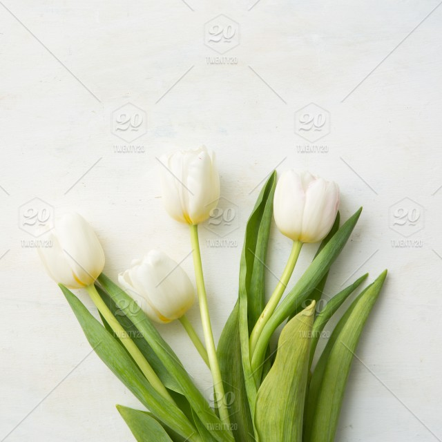 Spring Flowers Springtime White Flowers White Tulips Mothers