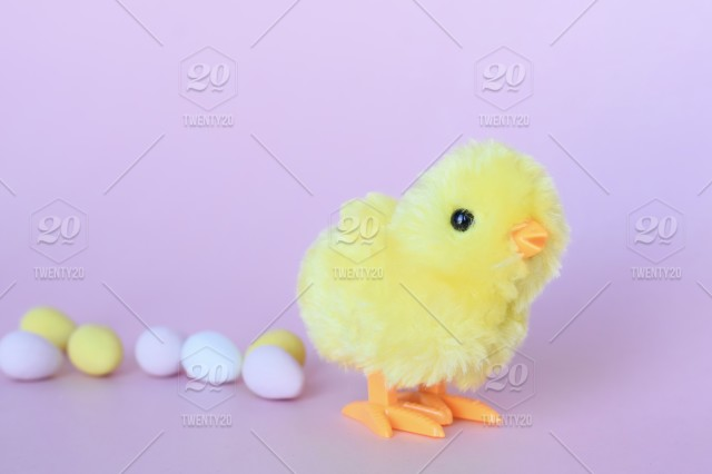 A Minimal Shot Of Yellow Baby Chick And Easter Eggs On Pink