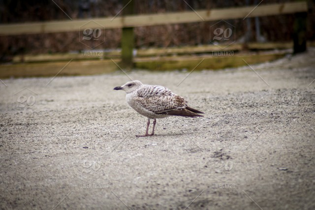 Baby seagull all alone stock photo 7901fe0c-fee8-4809-8669