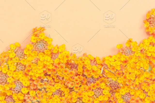 Frame Of Greeting Card With Yellow Flowers Pattern In