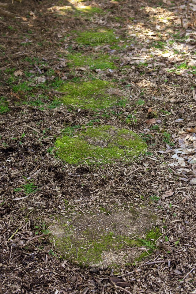 Stone Path Overgrown With Moss In Mulch Covered Garden Stock