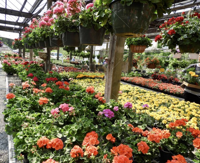 Plant nursery, flowers, potted plants, hanging baskets ... on how grow zinnia plants, bayou plants, farm plants, cartoon fern plants, potted plants, indoor plants, watering plants, tomatoes plants, fertilizing plants, pepper plants, sci-fi plants, nursery plants, annuals plants, water plants, history plants, tropical plants, horticulture plants, landscaping plants, pruning plants, green plants,