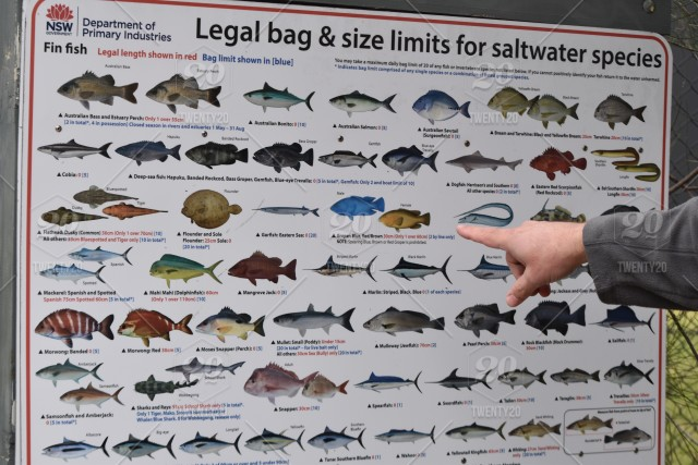Man Pointing Out The Legal Bag And Size Limits For Fishing Stock Photo
