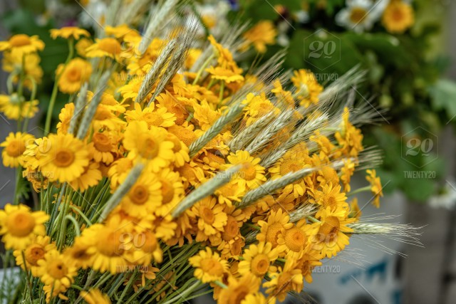 Yellow flower and wheat crop bouquet close up photograph flowers yellow flower and wheat crop bouquet close up photograph flowers field flower background yellow nature sunshine plant touching touch beautiful mightylinksfo