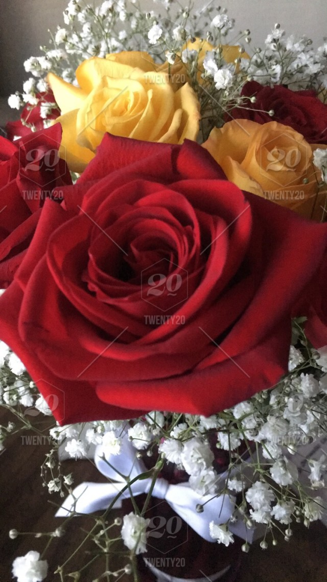Lovely roses stock photo 26ba9a51,3982,487a,afd6