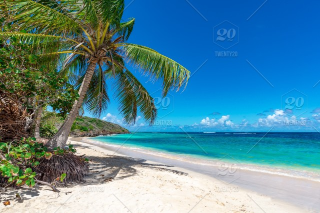 Palm Trees On The Beautiful Tropical Beach Stock Photo