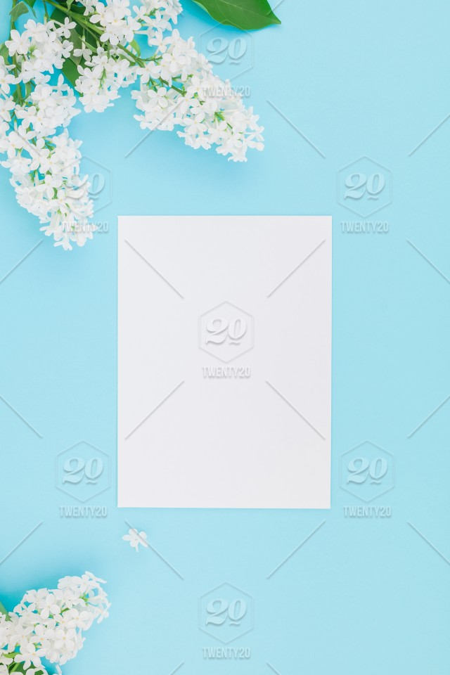 5f5c6c1dcdcfa Creative flat lay concept top view of blank postcard frame mock up and  white lilac flowers petals on pastel blue background with copy space in  minimal style ...