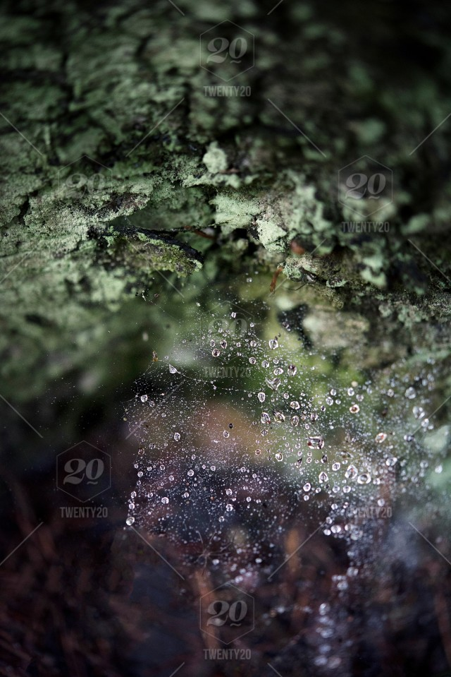 Moss Forest Tree Old Detail Green Nature Background Plant Floor Macro Rain Drops Closeup Texture Beautiful Natural Fresh Brown Grass Environment Flora Yellow Abstract Outdoor Tree Wild Beauty Stump Tree Wildlife Lichens