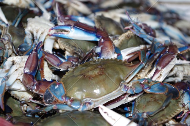 Blue crab  Fresh crab  Fresh crab for sale  Seafood diaplay