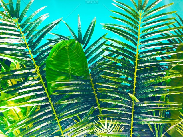 2938e983387 Green leaves and blue sky background. Green plants. Green trees. Tropical  theme. Summer vacation theme. Summer holiday concept. Bright blue sky.  Holidays.