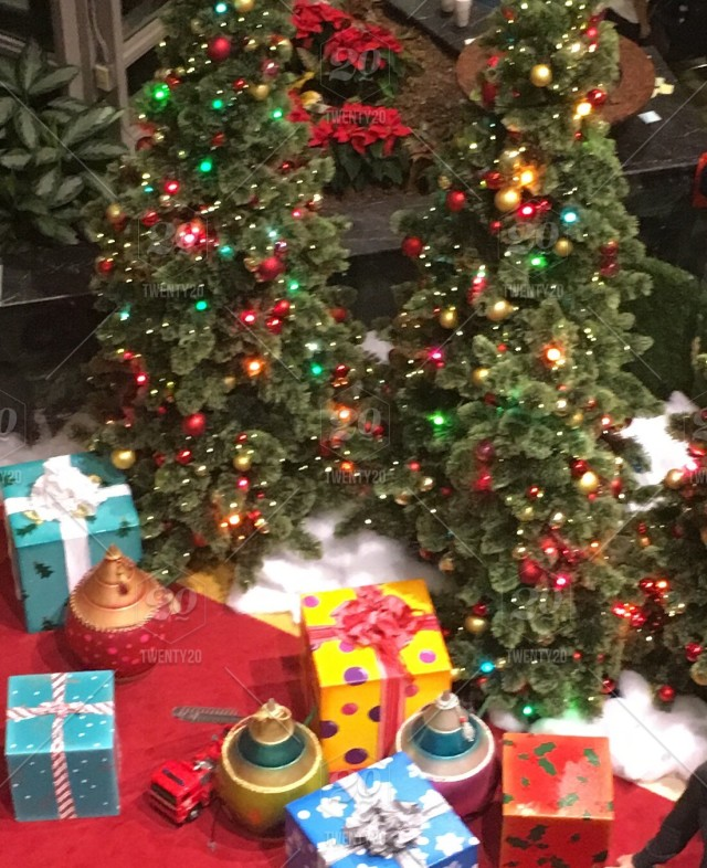 Christmas Trees And Presents Under Tree Stock Photo Fe75792e D523