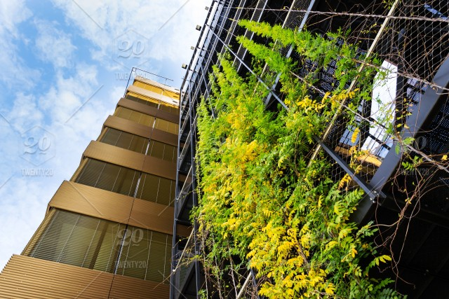 Sprawling Plants On Outdoor Green Living Wall Vertical Garden On