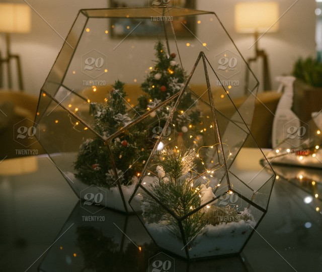 Glass cube with snow and fir trees