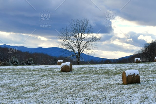 A winter day in rural Virginia  Snow covered hay bales in a