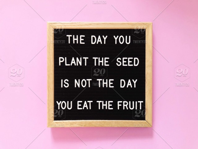 The Day You Plant The Seed Is Not The Day You Eat The Fruit Wise