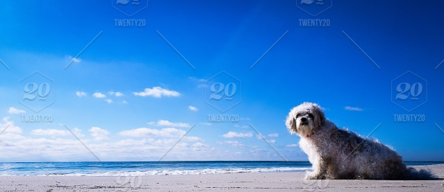 My dog Ellie's first time on the beach in winter and she not