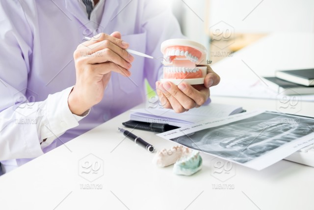 Concentrated dentist sitting at table with jaw samples tooth