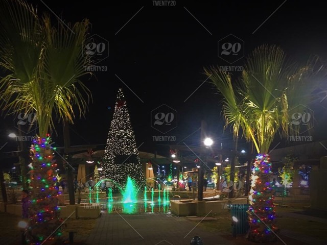 Decorated Christmas Tree In The Plaza In Between Two Decorated Palm