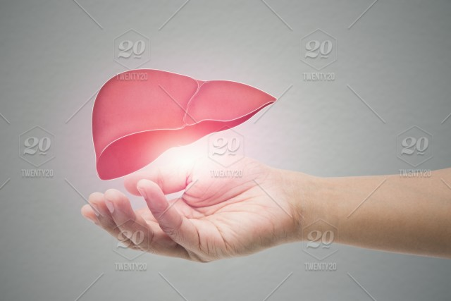 Man holding liver illustration against gray wall background. The concept of mental health protection and care. stock photo 40973028-fbce-41e9-aa77-59240e15e80e