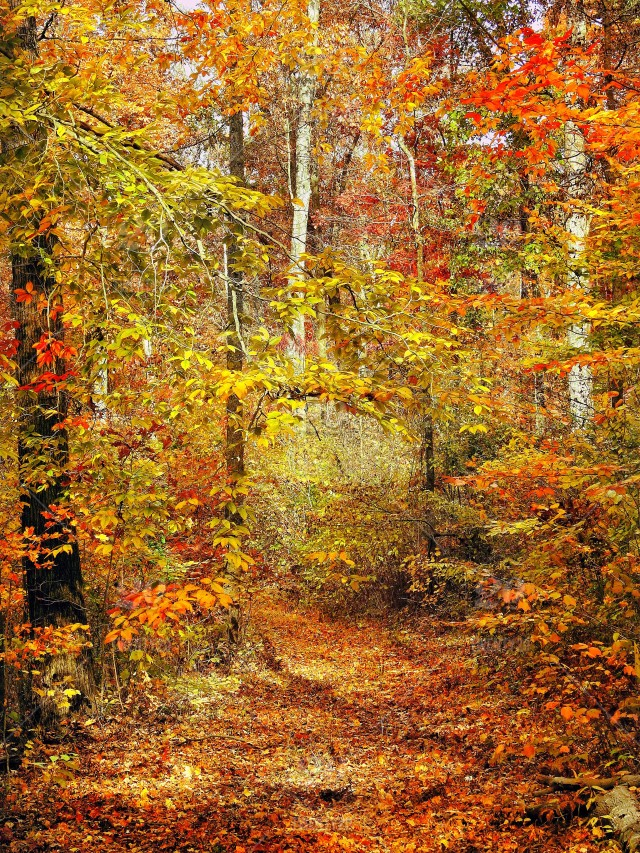 Fall hiking in Martin State Forest in Indiana stock photo 1ad790a4