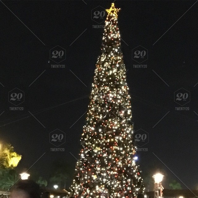 Outdoor Light Up Christmas Tree.Lit Up Outdoor Christmas Tree At Night Stock Photo 300dfbe1