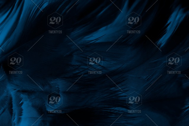 Black Blue Dark Feather Background Texture Soft Angel