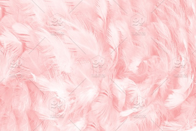 Coral Pink Feather Background Texture Soft Angel Pattern