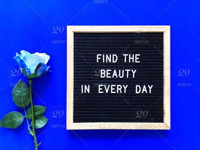 Find The Beauty In Every Day Blue Rose Beauty Beautiful